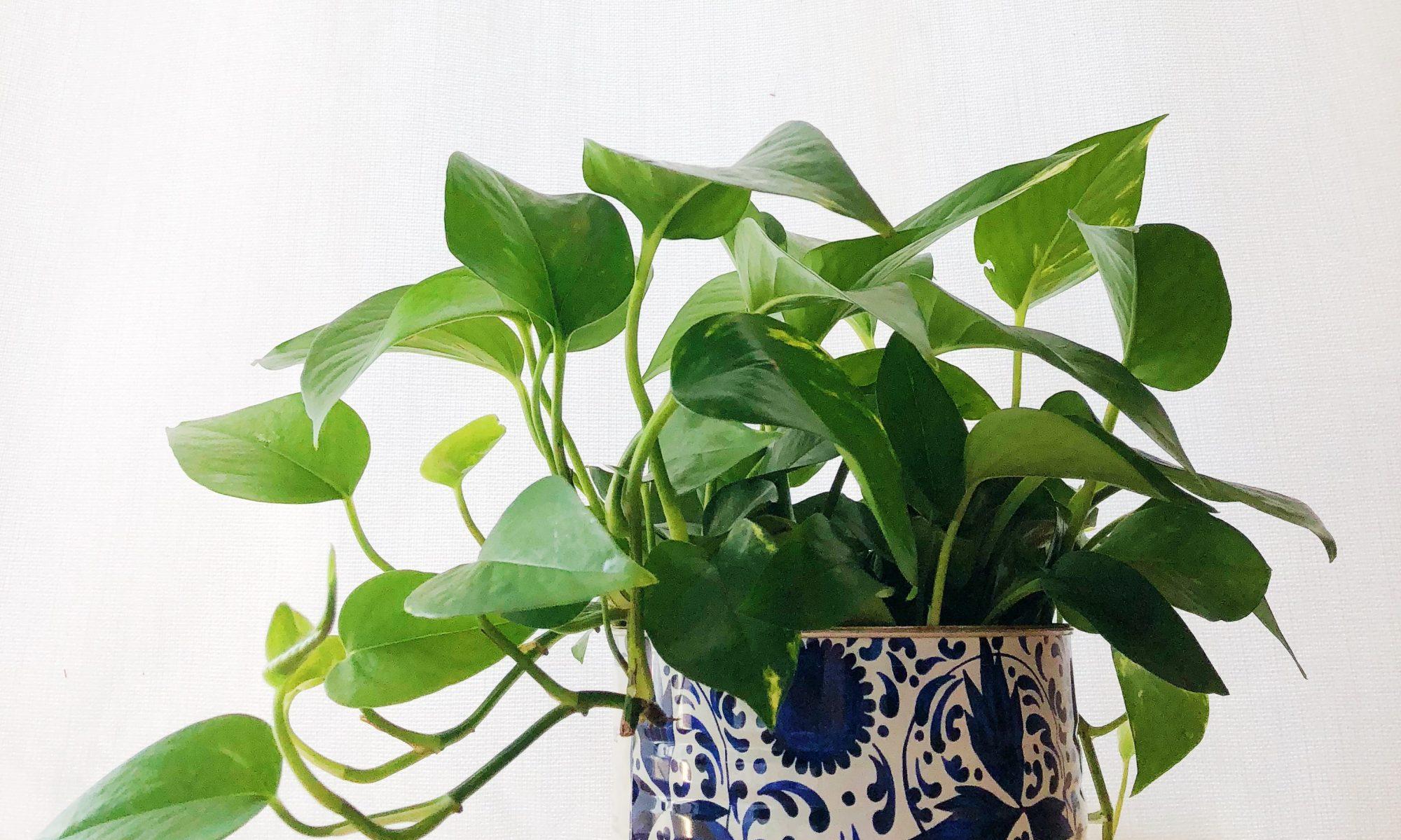 Terra Interior Plantscapes